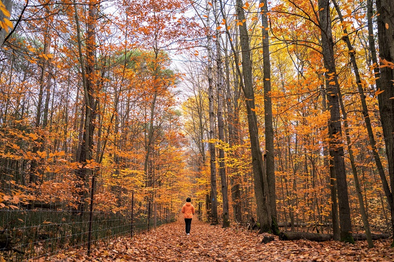 This person is walking through a forest of yellow and orange leaves
