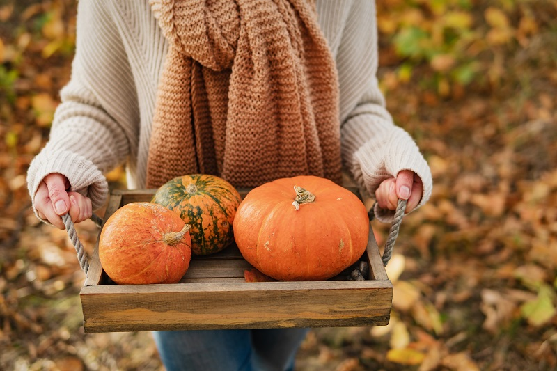 A woman wearing an orange scarf carries a tray of pumpkins through the fall leaves